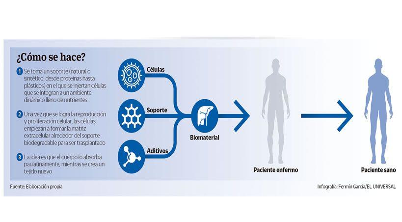 El futuro nos alcanza: Regeneración de órganos y tejidos