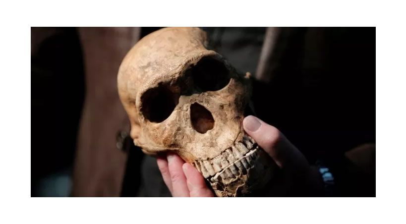 Un absceso dental atentó contra la especie humana hace millones de años