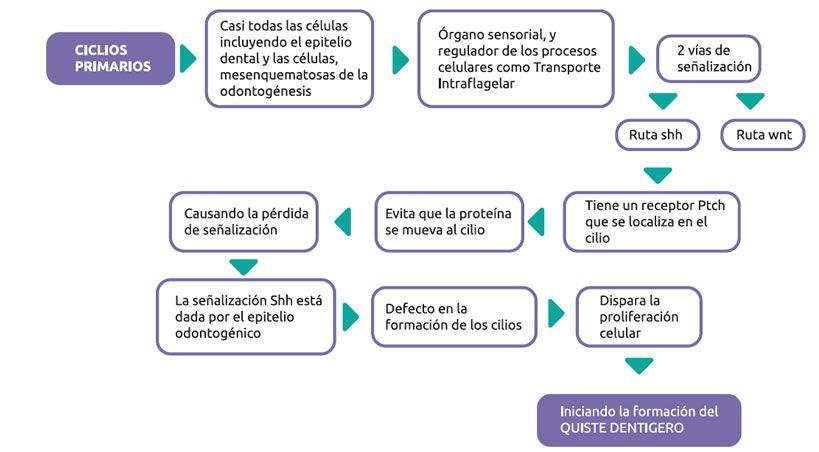Diagnóstico de quiste dentígero en sacos foliculares de terceros molares incluídos
